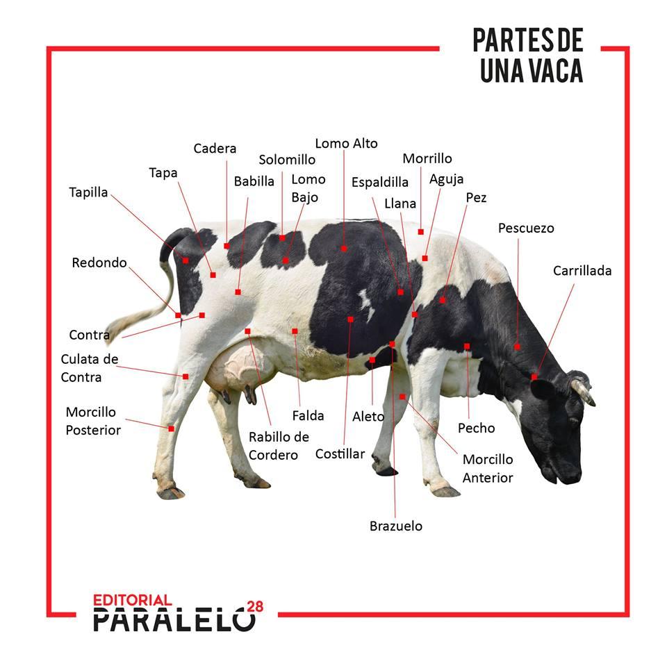 Imagen de la noticia Partes de una Vaca